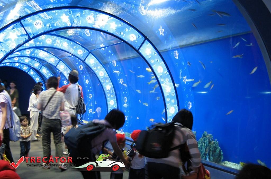 Acvariul din Antalya 2