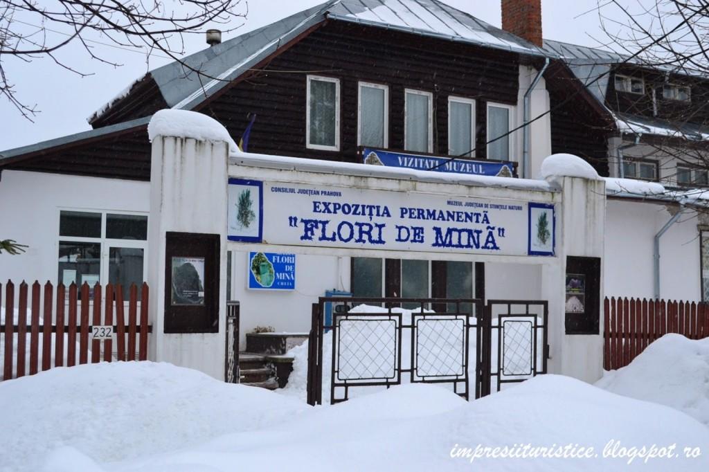 Muzeul Flori de Mina Cheia