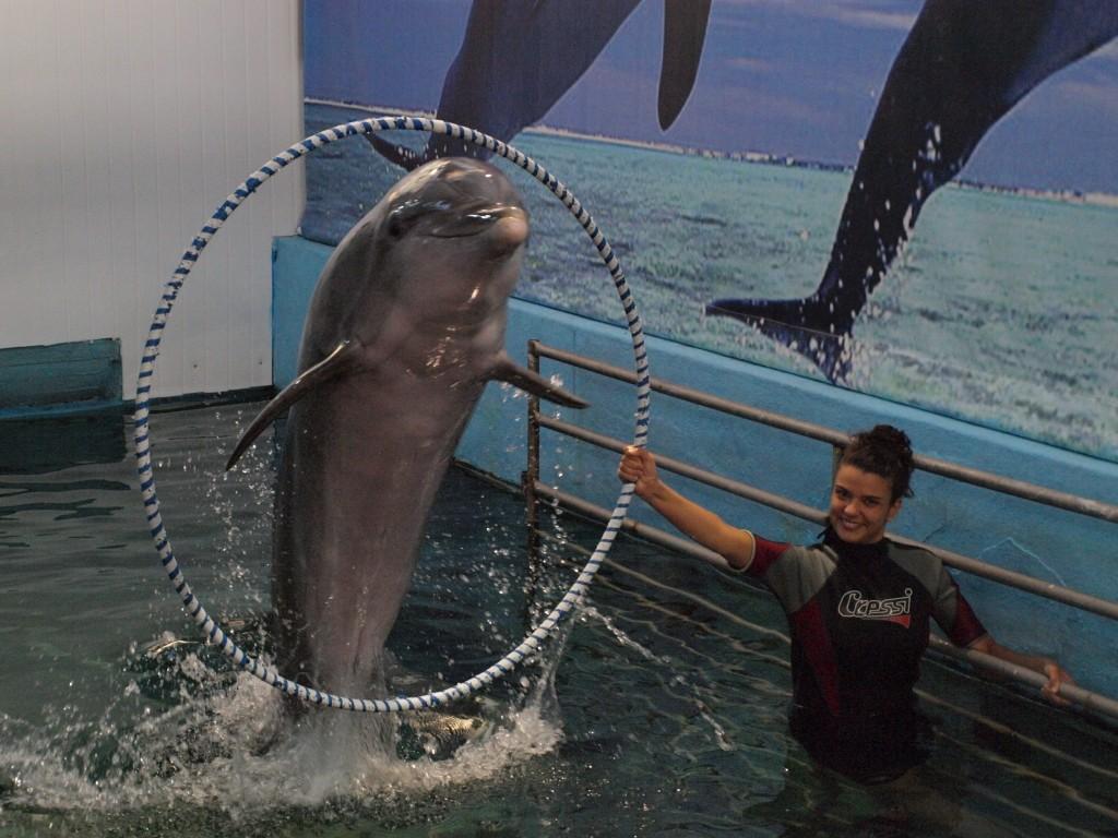 delfinariua varna