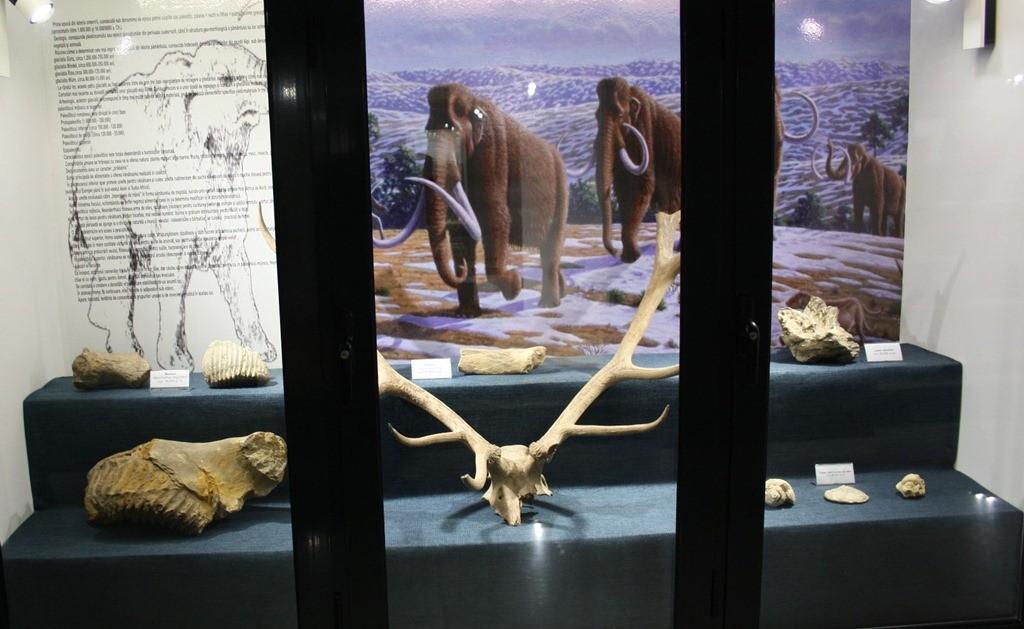 Muzeul Dunarii de Jos din Calarasi 1