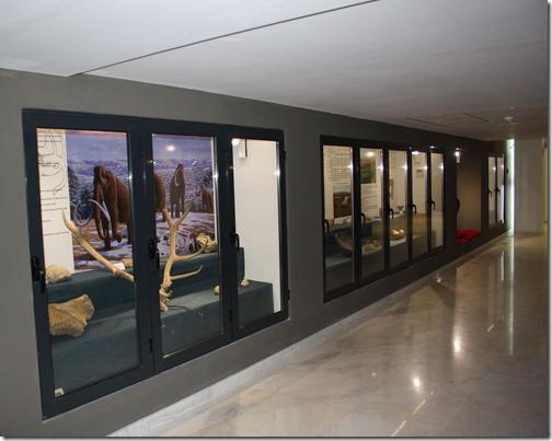 Muzeul Dunarii de Jos din Calarasi 2