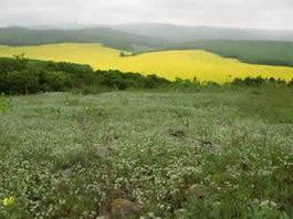 Rezervatia-naturala-Dealul-Sarica