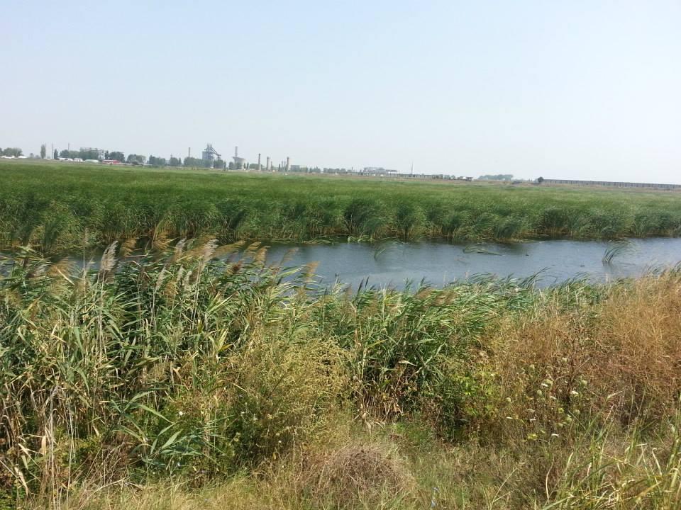 Rezervatia naturala Iezer, Calarasi