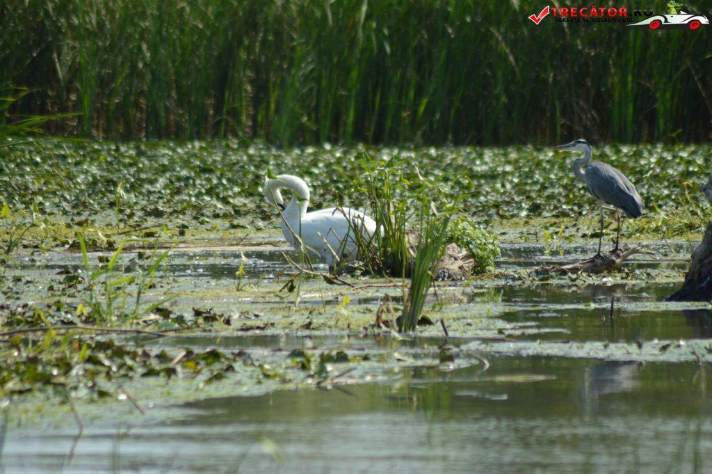 Rezervaţia Biosferei Delta Dunării Sulina 20