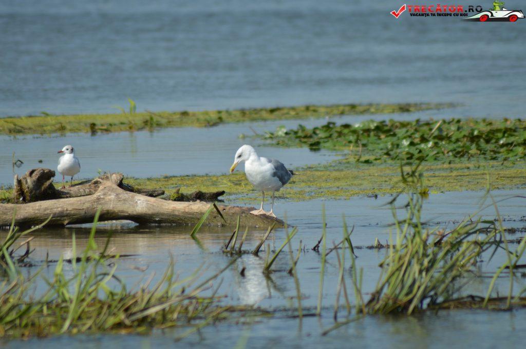 Rezervaţia Biosferei Delta Dunării Sulina 24